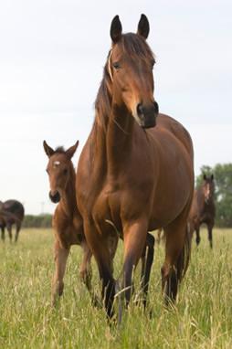 Equine Vet Services Brainerd Mn